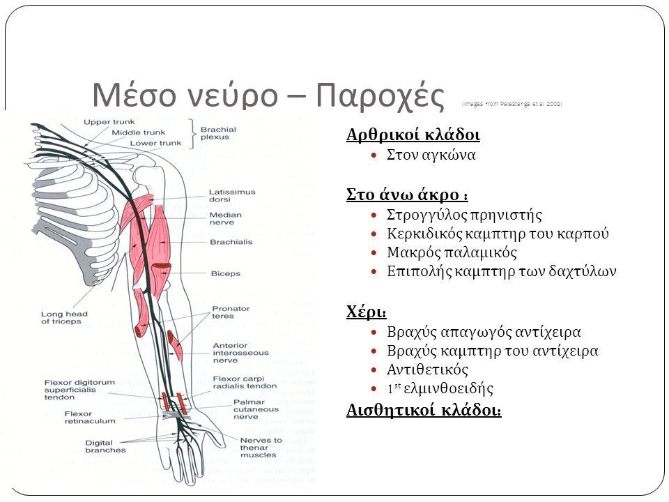 20 Μέσο νεύρο – Παροχές (images from Palastanga et al 2002) Αρθρικοί κλάδοι Στον αγκώνα Στο άνω άκρο : Στρογγύλος πρηνιστής Κερκιδικός καμπτηρ του καρ