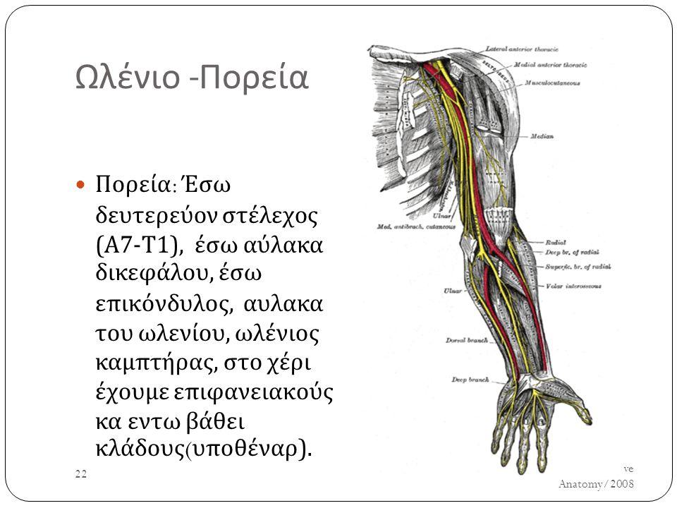 Ωλένιο - Πορεία Πορεία : Έσω δευτερεύον στέλεχος ( Α 7- Τ 1), έσω αύλακα δικεφάλου, έσω επικόνδυλος, αυλακα του ωλενίου, ωλένιος καμπτήρας, στο χέρι έ
