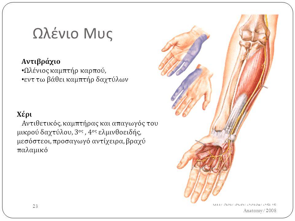 Ωλένιο Μυς UH/AM/SCR/NMS2/Nerve Anatomy/2008 23 Αντιβράχιο Ωλένιος καμπτήρ καρπού, εντ τω βάθει καμπτήρ δαχτύλων Χέρι Αντιθετικός, καμπτήρας και απαγω