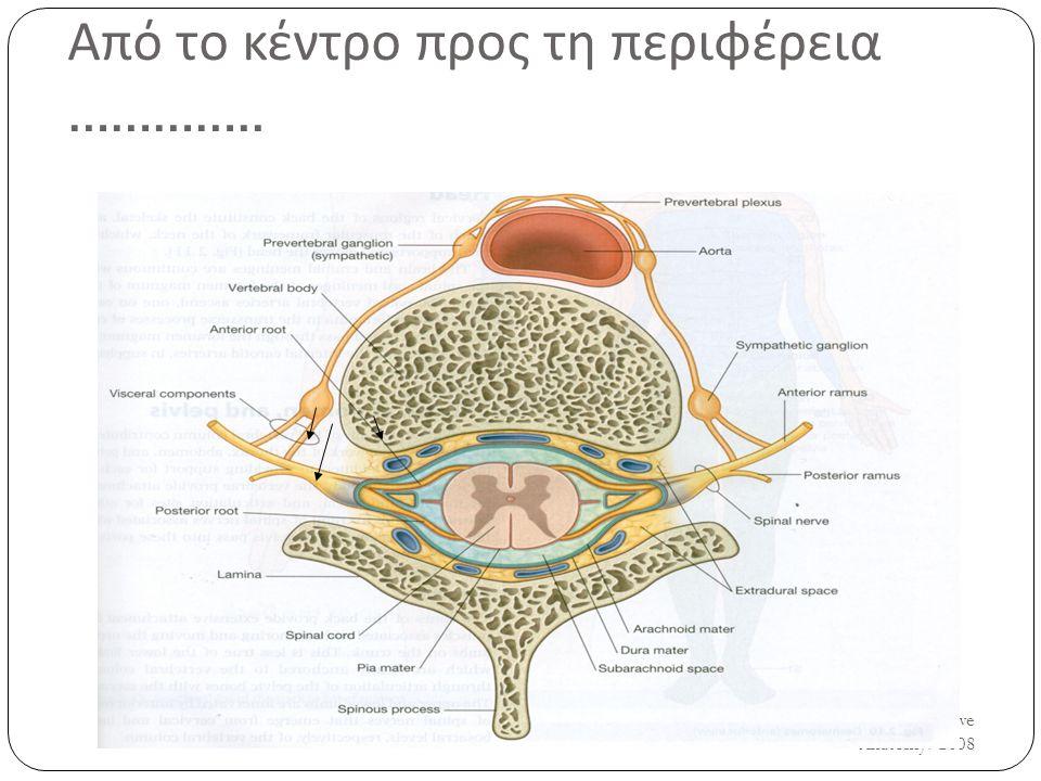 UH/AM/SCR/NMS2/Nerve Anatomy/2008 5 Από το κέντρο προς τη περιφέρεια …………..