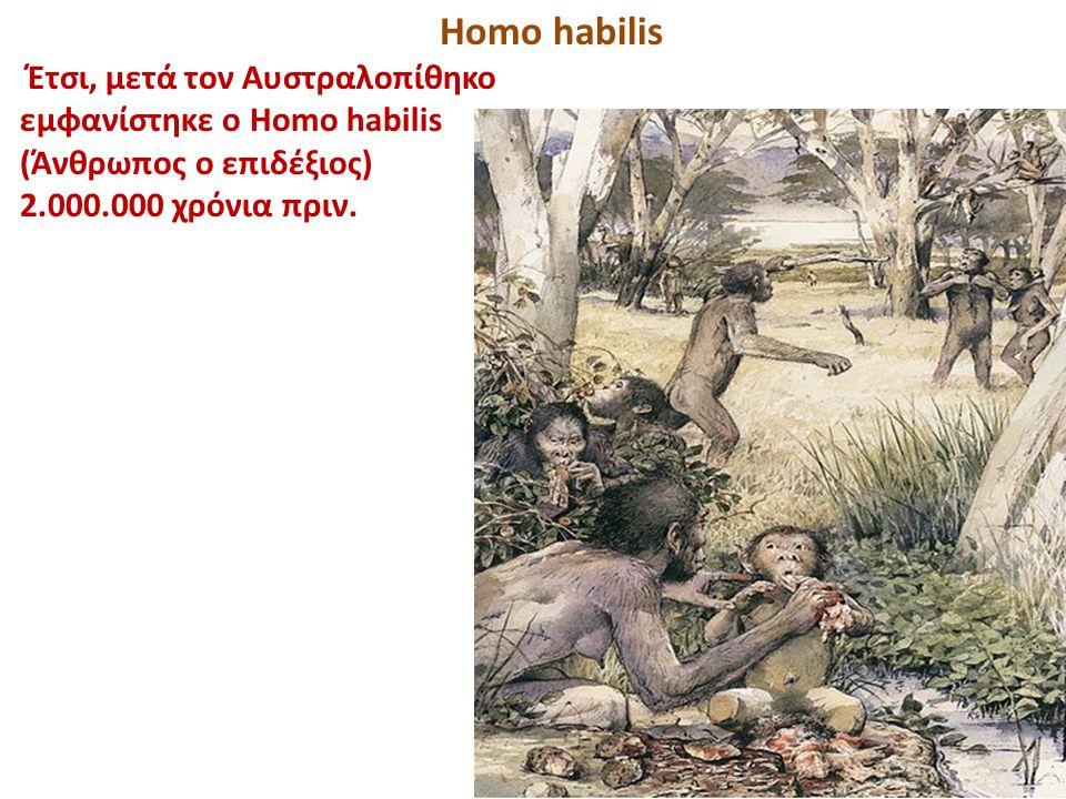 Homo habilis Έτσι, μετά τον Αυστραλοπίθηκο εμφανίστηκε ο Homo habilis (Άνθρωπος ο επιδέξιος) 2.000.000 χρόνια πριν.