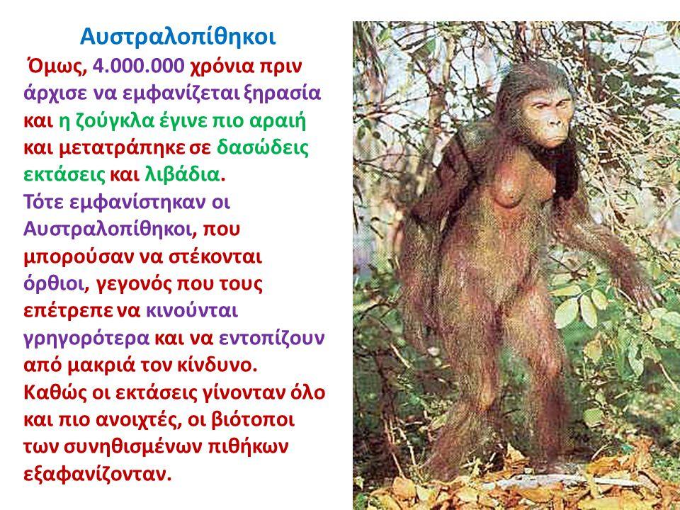 Αυστραλοπίθηκοι Όμως, 4.000.000 χρόνια πριν άρχισε να εμφανίζεται ξηρασία και η ζούγκλα έγινε πιο αραιή και μετατράπηκε σε δασώδεις εκτάσεις και λιβάδ