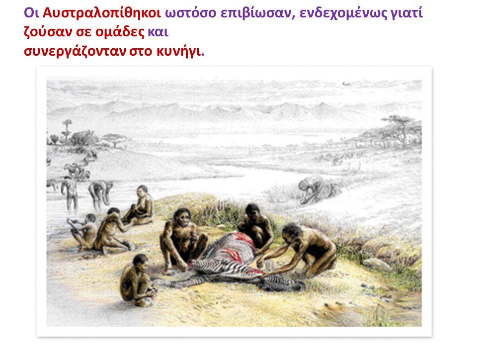 Οι Αυστραλοπίθηκοι ωστόσο επιβίωσαν, ενδεχομένως γιατί ζούσαν σε ομάδες και συνεργάζονταν στο κυνήγι.
