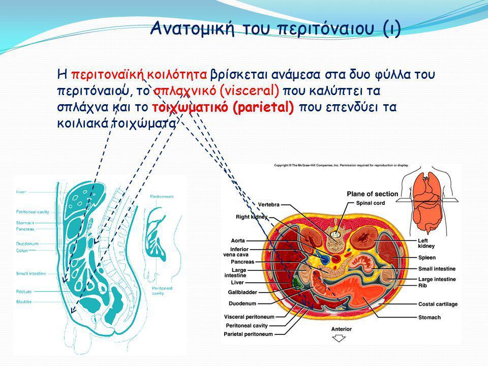 Ανατομική του περιτόναιου (ιι) σπλαχνικό περιτόναιο 80% της συνολικής επιφάνειας του περιτόναιου αιμάτωση: κοιλιακή και μεσεντέριες αρτηρίες απαγωγή αίματος: πυλαία φλέβα τοιχωματικό περιτόναιο 20% της συνολικής επιφάνειας του περιτόναιου αιμάτωση: περισπώμενες, οσφυϊκές, μεσοπλεύριες και επιγάστριες αρτηρίες, απαγωγή αίματος: κάτω κοίλη φλέβα ΘΕΩΡΕΙΤΑΙ ΠΙΟ ΣΗΜΑΝΤΙΚΟ ΓΙΑ ΤΗΝ ΠΕΡΙΤΟΝΑΪΚΗ ΚΑΘΑΡΣΗ