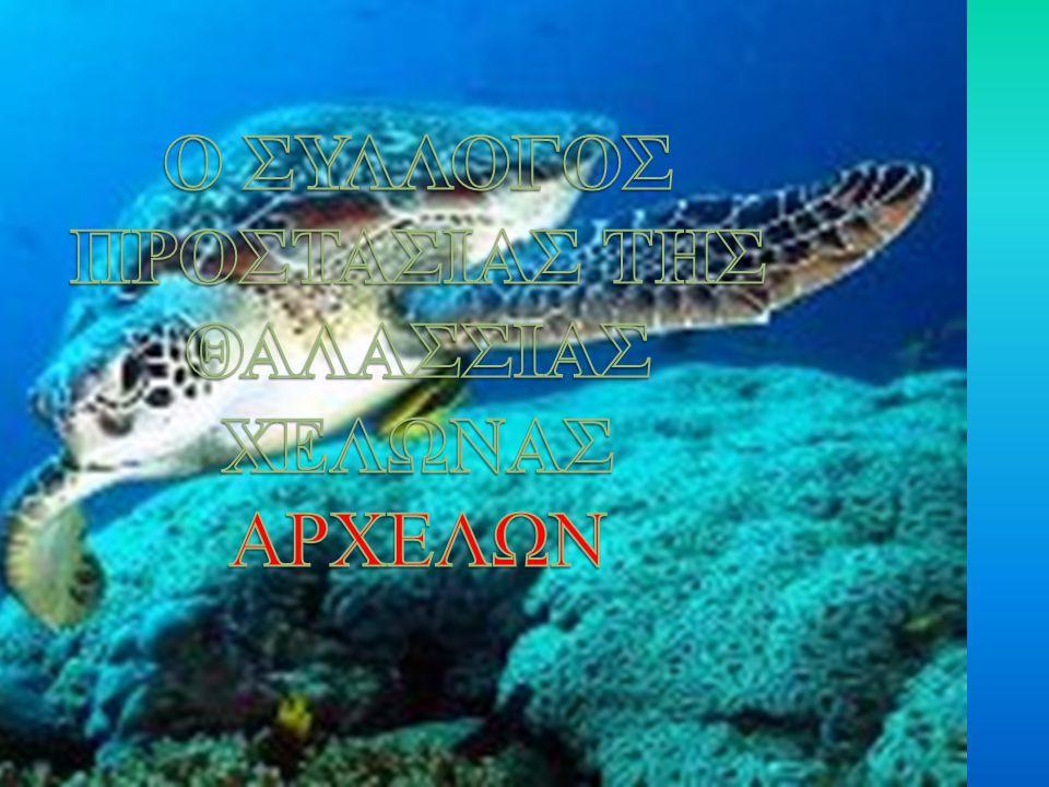 Ο Σύλλογος για την Προστασία της Θαλάσσιας Χελώνας ΑΡΧΕΛΩΝ.