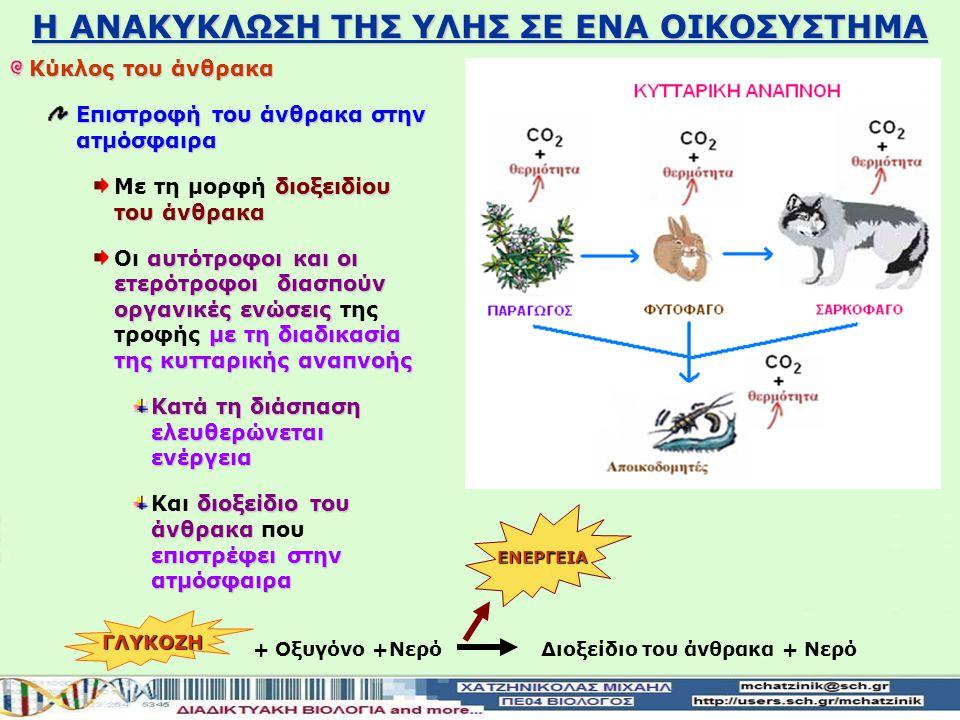 Η ΑΝΑΚΥΚΛΩΣΗ ΤΗΣ ΥΛΗΣ ΣΕ ΕΝΑ ΟΙΚΟΣΥΣΤΗΜΑ Κύκλος του άνθρακα Είσοδος του άνθρακα στο οικοσύστημα διοξειδίου του άνθρακα Με τη μορφή του ατμοσφαιρικού διοξειδίου του άνθρακα παραγωγοί το απορροφούν Οι παραγωγοί το απορροφούν Το μετατρέπουν σε γλυκόζη Το μετατρέπουν σε γλυκόζη πλούσια σε ενέργεια Διοξείδιο του άνθρακα+ Νερό + Οξυγόνο +Νερό ΓΛΥΚΟΖΗ