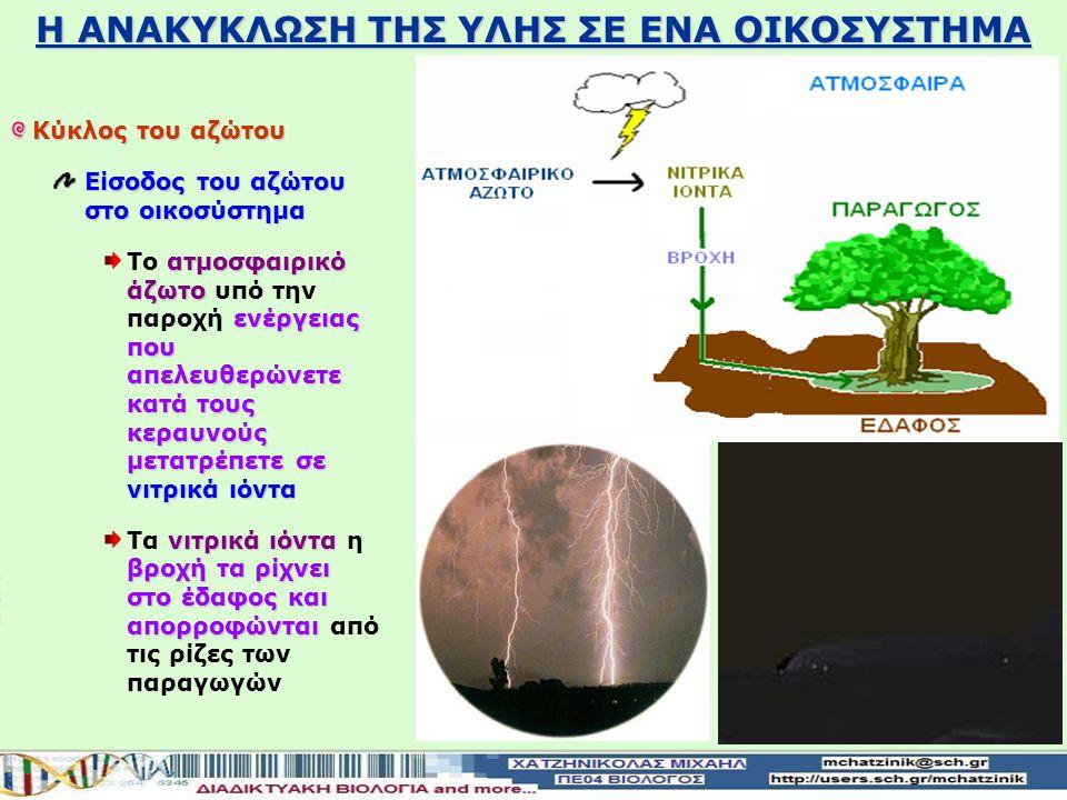 Η ΑΝΑΚΥΚΛΩΣΗ ΤΗΣ ΥΛΗΣ ΣΕ ΕΝΑ ΟΙΚΟΣΥΣΤΗΜΑ Κύκλος του αζώτου άζωτο Το άζωτο συμμετέχει στη δομή πολλών οργανικών μορίων: Νουκλεϊκών οξέων Πρωτεϊνών άζωτο περιέχετε 70% στον ατμοσφαιρικό αέρα Το άζωτο περιέχετε σε ποσοστό 70% στον ατμοσφαιρικό αέρα άζωτο της ατμόσφαιραςδεν απορροφηθεί από τους παραγωγούς Το άζωτο της ατμόσφαιρας δεν μπορεί να απορροφηθεί από τους παραγωγούς Μετατρέπετε πρώτα σενιτρικά ιόντα απορροφάτε από τις ρίζες των παραγωγών Μετατρέπετε πρώτα σε νιτρικά ιόντα και μετά απορροφάτε από τις ρίζες των παραγωγών