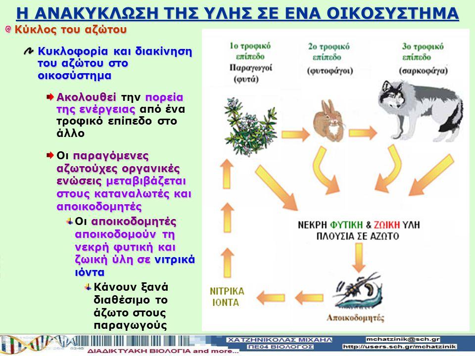 Η ΑΝΑΚΥΚΛΩΣΗ ΤΗΣ ΥΛΗΣ ΣΕ ΕΝΑ ΟΙΚΟΣΥΣΤΗΜΑ Κύκλος του αζώτου Είσοδος του αζώτου στο οικοσύστημα ατμοσφαιρικό άζωτοδεσμεύεται και μετατρέπετε σε νιτρικά ιόντα με τη βοήθεια βακτηρίων Το ατμοσφαιρικό άζωτο δεσμεύεται και μετατρέπετε σε νιτρικά ιόντα με τη βοήθεια βακτηρίων Αζωτοδεσμευτικά συμβιωτικά βακτήρια Στις ρίζες των ψυχανθών