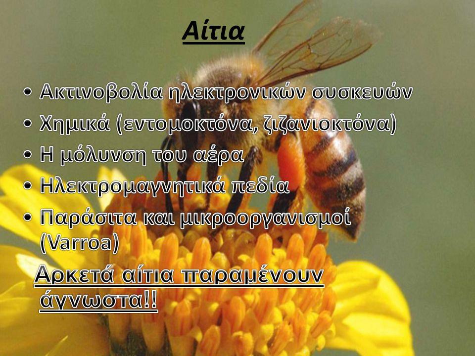 Varroa Τα Βαρρόα έχουν το μεγαλύτερο αντίκτυπο σε σύγκριση με τα άλλα παράσιτα στον κλάδο της μελισσοκομίας.