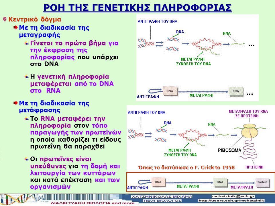 ΡΟΗ ΤΗΣ ΓΕΝΕΤΙΚΗΣ ΠΛΗΡΟΦΟΡΙΑΣ Κεντρικό δόγμα της μοριακής βιολογίας Κεντρικό δόγμα της μοριακής βιολογίας διατυπωμένο από τον F. Crick DΝΑ περιέχει απ