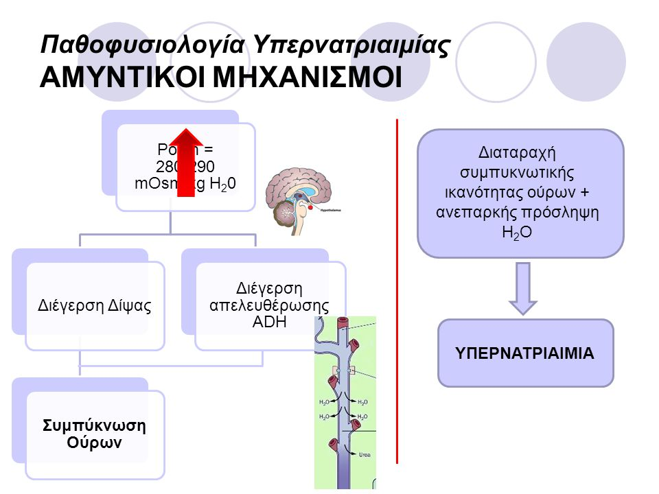Παθοφυσιολογία Υπερνατριαιμίας ΑΜΥΝΤΙΚΟΙ ΜΗΧΑΝΙΣΜΟΙ Posm = 280-290 mOsm/kg H20 Διέγερση Δίψας Συμπύκνωση Ούρων Διέγερση απελευθέρωσης ADH Διαταραχή συ