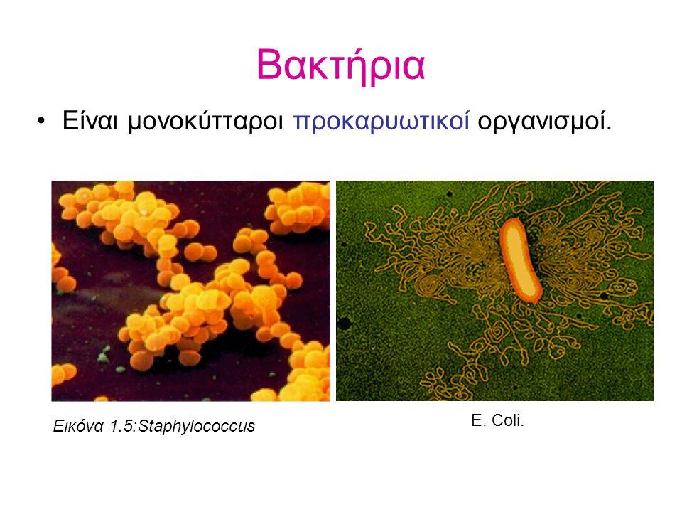 Βακτήρια Είναι μονοκύτταροι προκαρυωτικοί οργανισμοί. Εικόνα 1.5:Staphylococcus Ε. Coli.