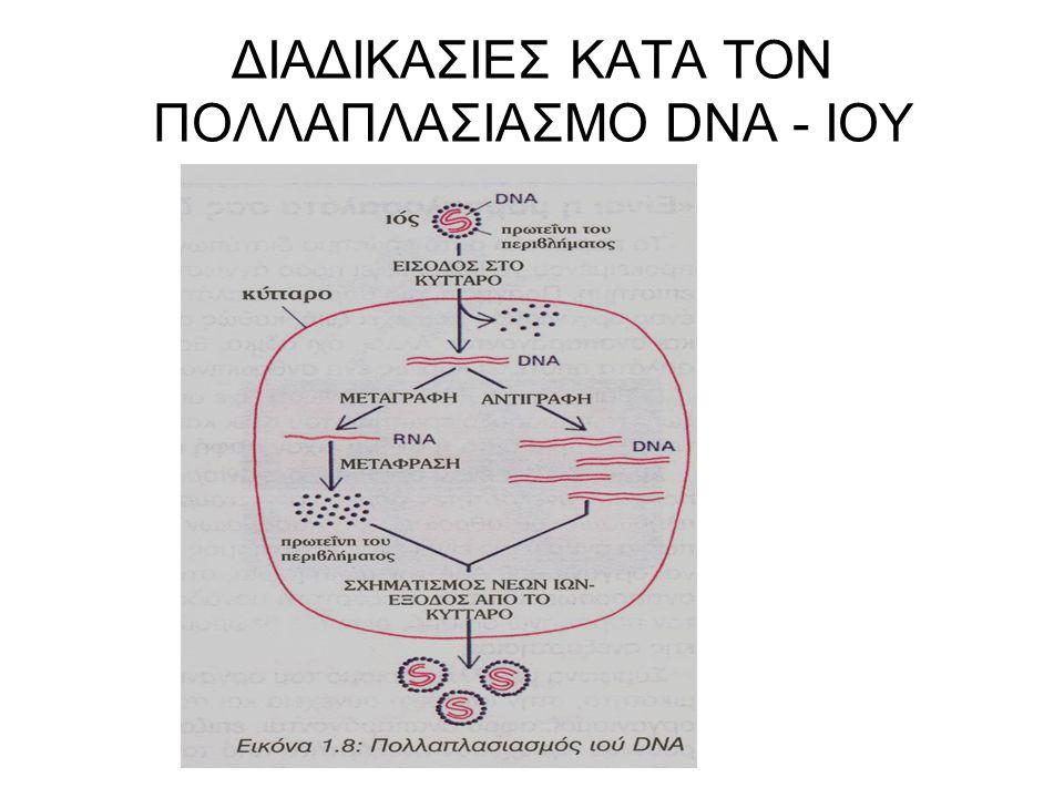 ΔΙΑΔΙΚΑΣΙΕΣ ΚΑΤΑ ΤΟΝ ΠΟΛΛΑΠΛΑΣΙΑΣΜΟ DNA - ΙΟΥ