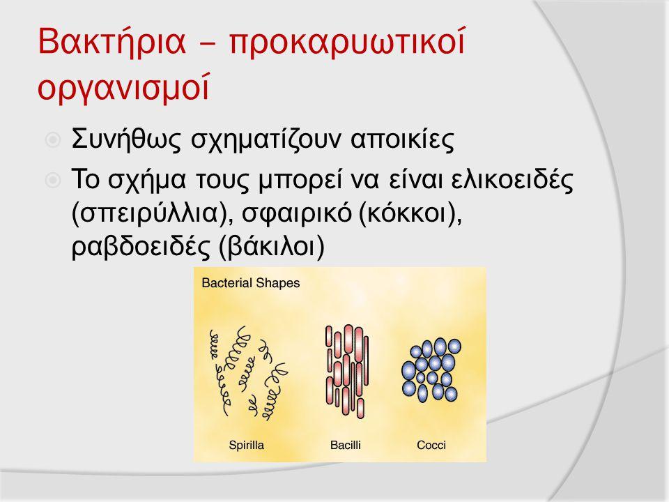 Βακτήρια – προκαρυωτικοί οργανισμοί  Συνήθως σχηματίζουν αποικίες  Το σχήμα τους μπορεί να είναι ελικοειδές (σπειρύλλια), σφαιρικό (κόκκοι), ραβδοει