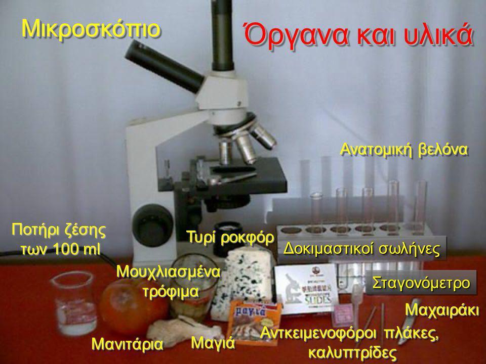 Τι περιμένουμε να δούμε Υφές Μυκητύλλια ( υφές που συμπλέκονται και διακλαδίζονται) Διάφραγμα (διαχωρίζει τις υφές) Βλαστικό Μυκητύλλιο Αναπαραγωγικό Μυκητύλλιο Κονίδια (περιέχουν σπόρια) Penicillium sp.