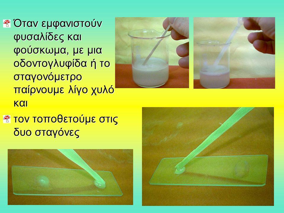 Παρατήρηση μυκήτων από μουχλιασμένες τροφές Με την αιχμή της βελόνας ανατομίας αφαιρούμε επιφανειακά ελάχιστη μούχλα από ένα μουχλιασμένο τρόφιμο