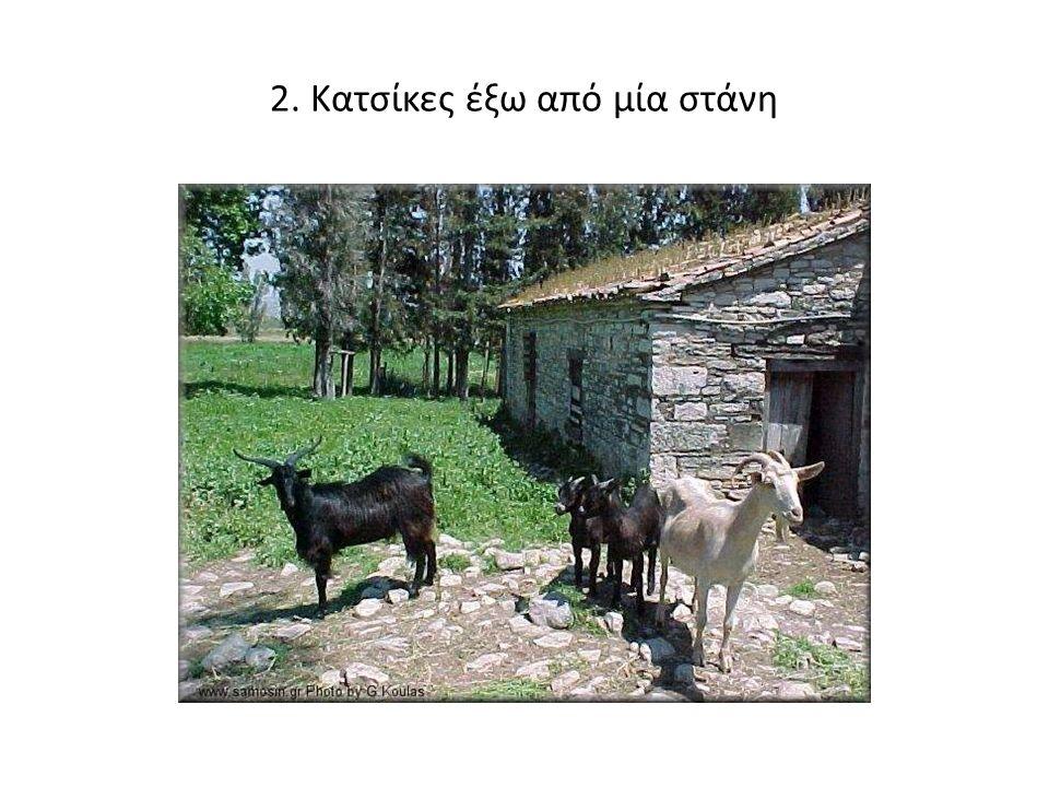 2. Κατσίκες έξω από μία στάνη
