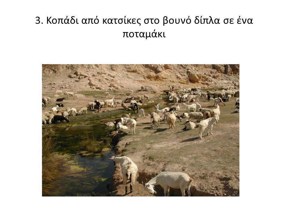 3. Κοπάδι από κατσίκες στο βουνό δίπλα σε ένα ποταμάκι