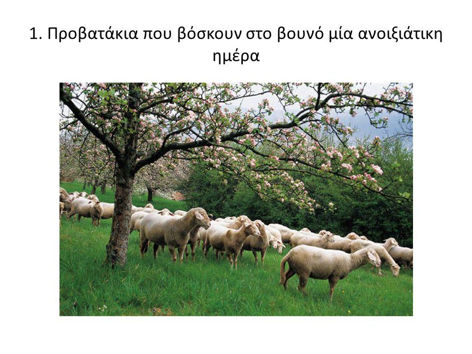 1. Προβατάκια που βόσκουν στο βουνό μία ανοιξιάτικη ημέρα