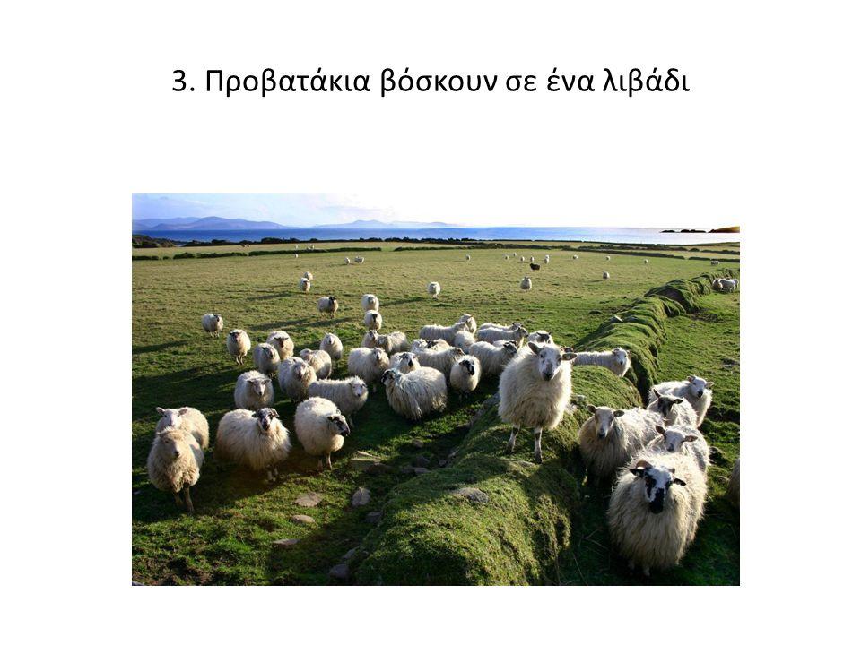 3. Προβατάκια βόσκουν σε ένα λιβάδι