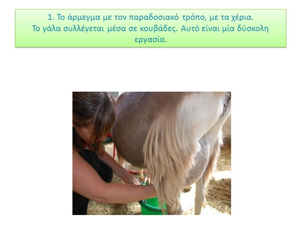 1. Το άρμεγμα με τον παραδοσιακό τρόπο, με τα χέρια. Το γάλα συλλέγεται μέσα σε κουβάδες. Αυτό είναι μία δύσκολη εργασία.
