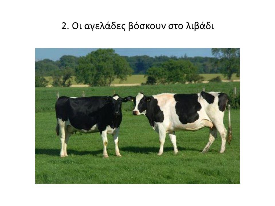 2. Οι αγελάδες βόσκουν στο λιβάδι