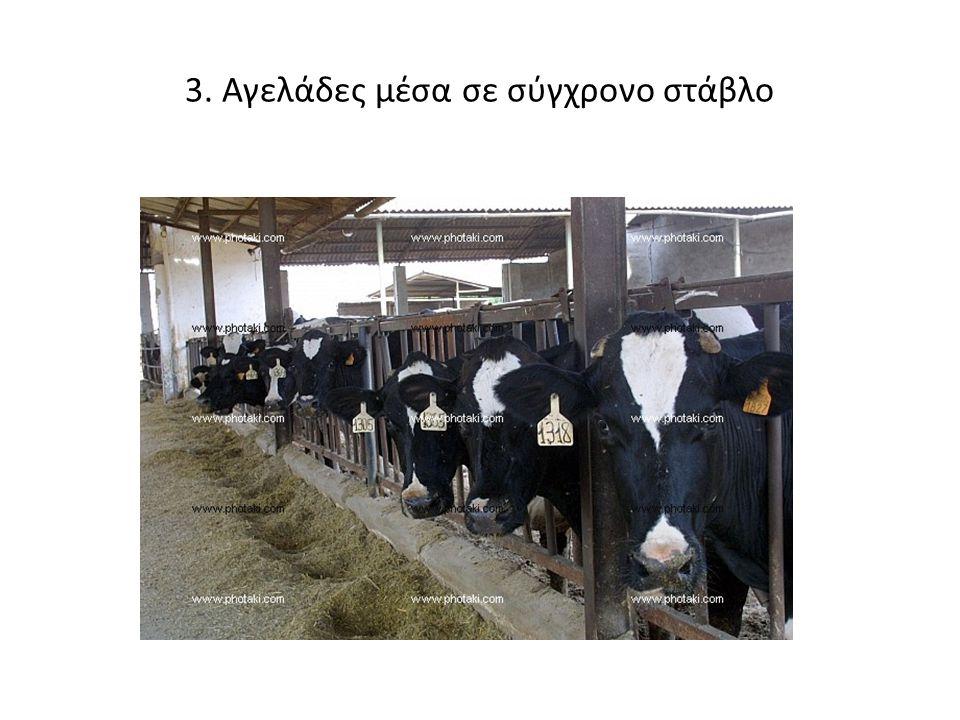 3. Αγελάδες μέσα σε σύγχρονο στάβλο