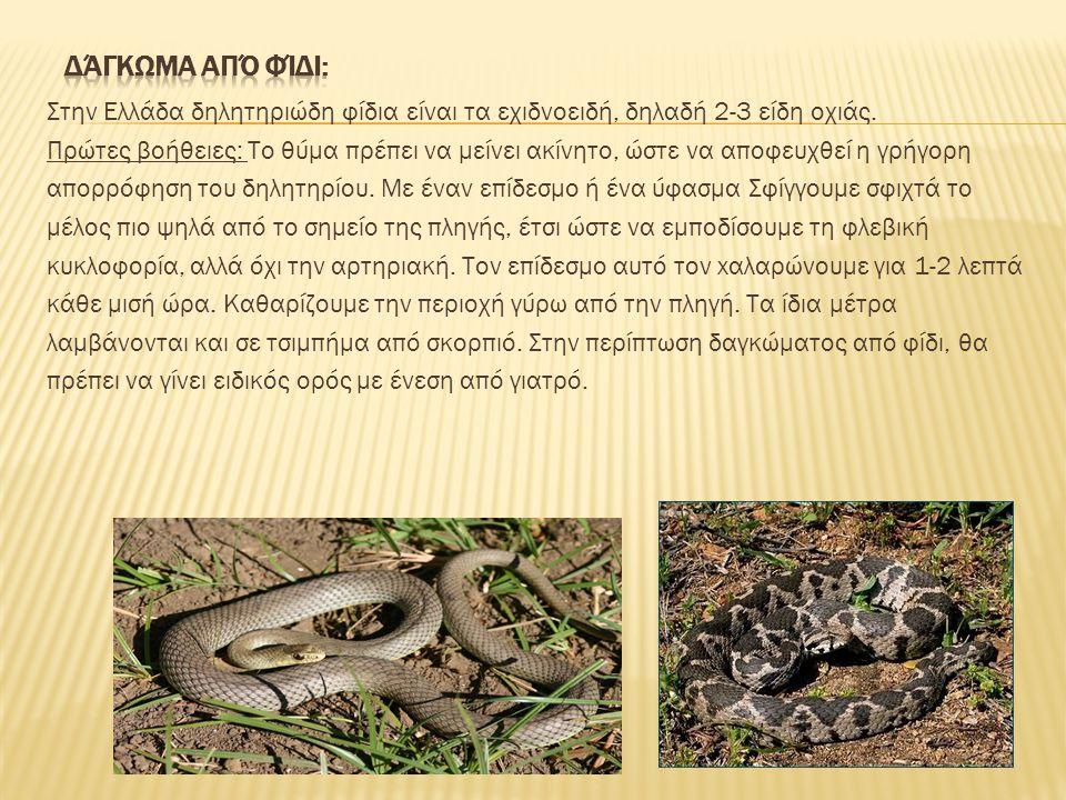 Στην Ελλάδα δηλητηριώδη φίδια είναι τα εχιδνοειδή, δηλαδή 2-3 είδη οχιάς. Πρώτες βοήθειες: Tο θύμα πρέπει να μείνει ακίνητο, ώστε να αποφευχθεί η γρήγ