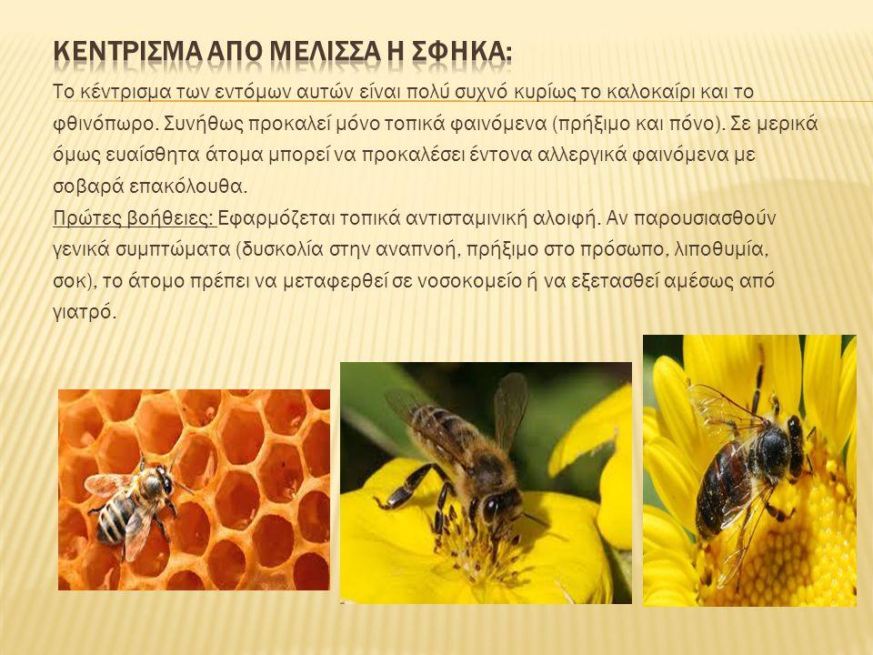 Το κέντρισμα των εντόμων αυτών είναι πολύ συχνό κυρίως το καλοκαίρι και το φθινόπωρο. Συνήθως προκαλεί μόνο τοπικά φαινόμενα (πρήξιμο και πόνο). Σε με