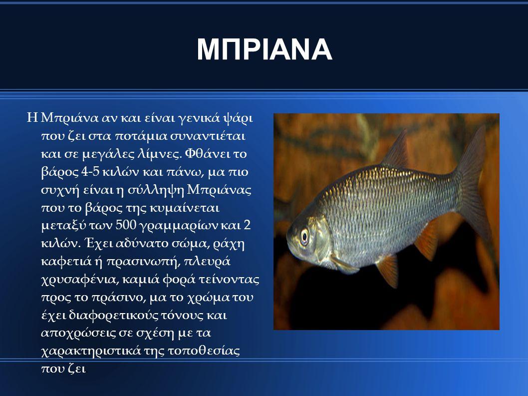 ΜΠΡΙΑΝΑ Η Μπριάνα αν και είναι γενικά ψάρι που ζει στα ποτάμια συναντιέται και σε μεγάλες λίμνες. Φθάνει το βάρος 4‐5 κιλών και πάνω, μα πιο συχνή είν