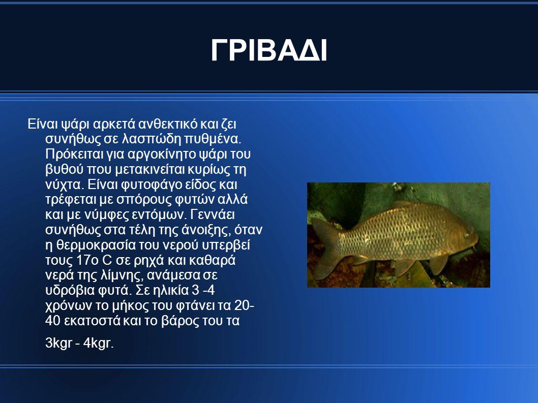 ΓΡΙΒΑΔΙ Είναι ψάρι αρκετά ανθεκτικό και ζει συνήθως σε λασπώδη πυθμένα. Πρόκειται για αργοκίνητο ψάρι του βυθού που μετακινείται κυρίως τη νύχτα. Είνα