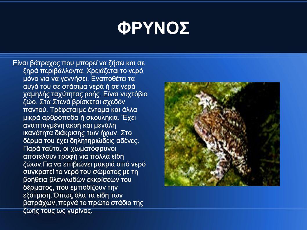 ΦΡΥΝΟΣ Είναι βάτραχος που μπορεί να ζήσει και σε ξηρά περιβάλλοντα. Χρειάζεται το νερό μόνο για να γεννήσει. Εναποθέτει τα αυγά του σε στάσιμα νερά ή
