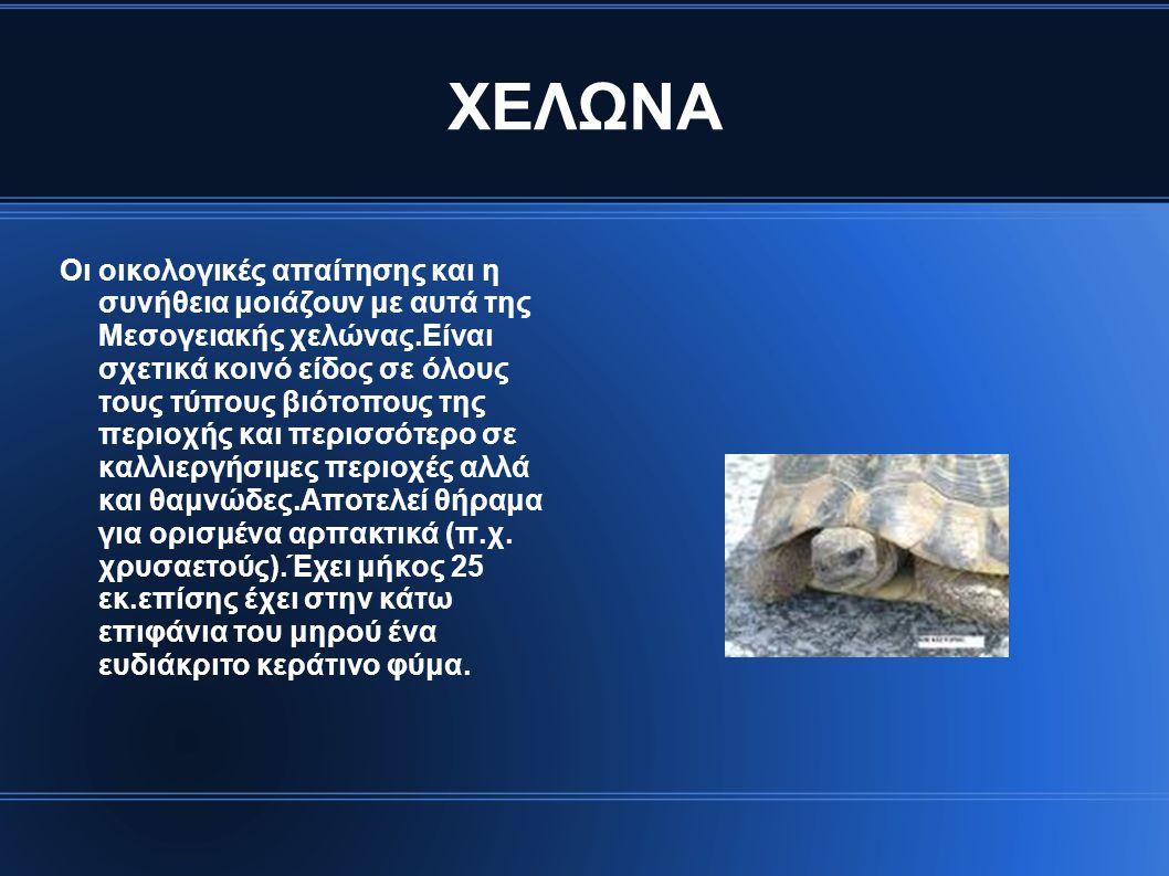 ΧΕΛΩΝΑ Οι οικολογικές απαίτησης και η συνήθεια μοιάζουν με αυτά της Μεσογειακής χελώνας.Είναι σχετικά κοινό είδος σε όλους τους τύπους βιότοπους της π