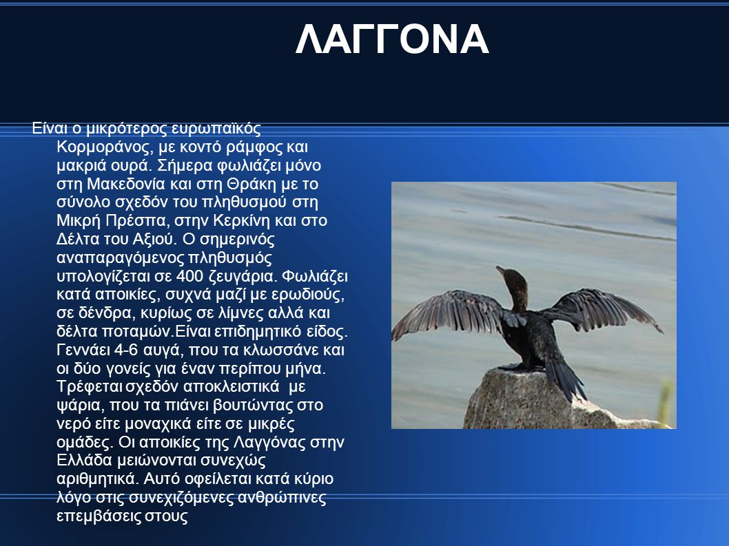 ΛΑΓΓΟΝΑ Είναι ο μικρότερος ευρωπαϊκός Κορμοράνος, με κοντό ράμφος και μακριά ουρά. Σήμερα φωλιάζει μόνο στη Μακεδονία και στη Θράκη με το σύνολο σχεδό