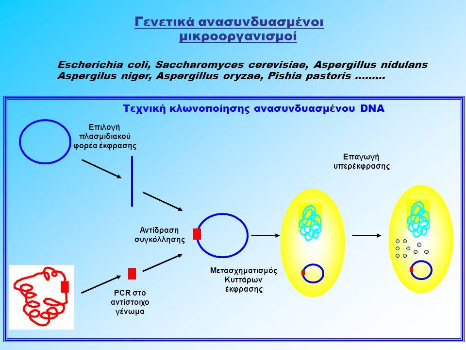 Γενετικά ανασυνδυασμένοι μικροοργανισμοί Escherichia coli, Saccharomyces cerevisiae, Aspergillus nidulans Aspergilus niger, Aspergillus oryzae, Pishia