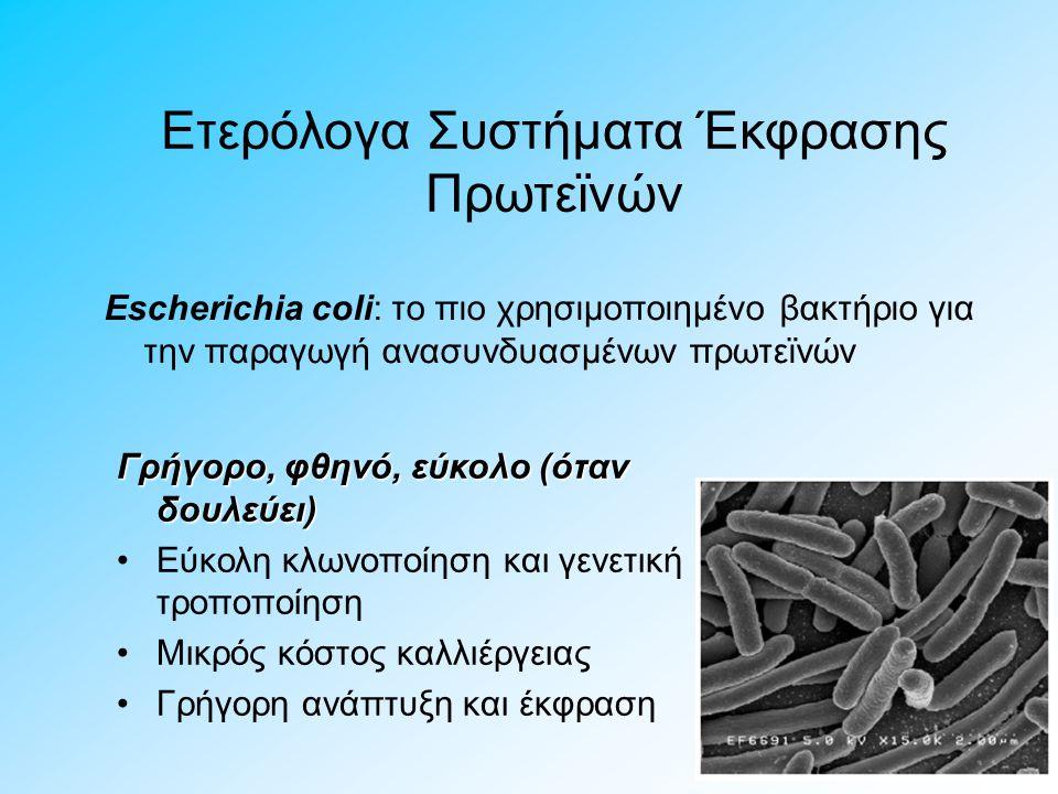 Escherichia coli: το πιο χρησιμοποιημένο βακτήριο για την παραγωγή ανασυνδυασμένων πρωτεϊνών Ετερόλογα Συστήματα Έκφρασης Πρωτεϊνών Γρήγορο, φθηνό, εύ