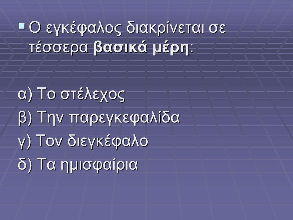  Ο εγκέφαλος διακρίνεται σε τέσσερα βασικά μέρη: α) Το στέλεχος β) Την παρεγκεφαλίδα γ) Τον διεγκέφαλο δ) Τα ημισφαίρια