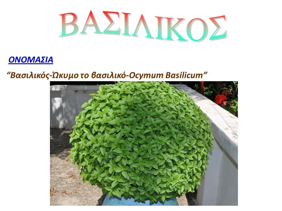 """ΟΝΟΜΑΣΙΑ """"Βασιλικός-Ώκυμο το βασιλικό-Ocymum Basilicum"""""""