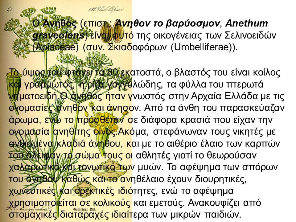 Ο Άνηθος (επιστ.: Άνηθον το βαρύοσμον, Anethum graveolens) είναι φυτό της οικογένειας των Σελινοειδών (Apiaceae) (συν. Σκιαδοφόρων (Umbelliferae)). Το