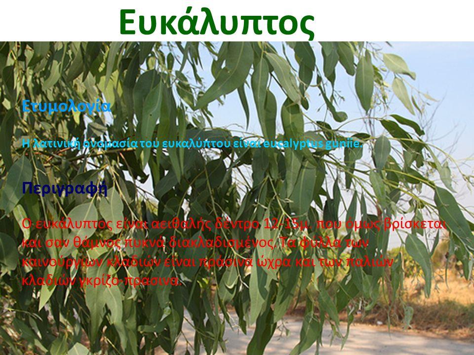 Ευκάλυπτος Ετυμολογία Η λατινική ονομασία του ευκαλύπτου είναι eucalyptus guniie. Περιγραφή Ο ευκάλυπτος είναι αειθαλής δέντρο 12-15μ. που όμως βρίσκε