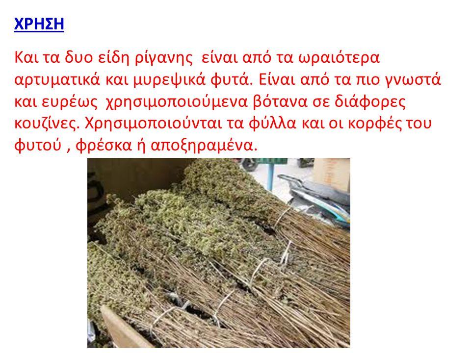 ΧΡΗΣΗ Και τα δυο είδη ρίγανης είναι από τα ωραιότερα αρτυματικά και μυρεψικά φυτά. Είναι από τα πιο γνωστά και ευρέως χρησιμοποιούμενα βότανα σε διάφο