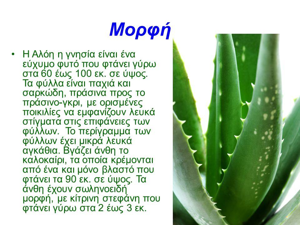 Η Αλόη η γνησία είναι ένα εύχυμο φυτό που φτάνει γύρω στα 60 έως 100 εκ. σε ύψος. Τα φύλλα είναι παχιά και σαρκώδη, πράσινα προς το πράσινο-γκρι, με ο