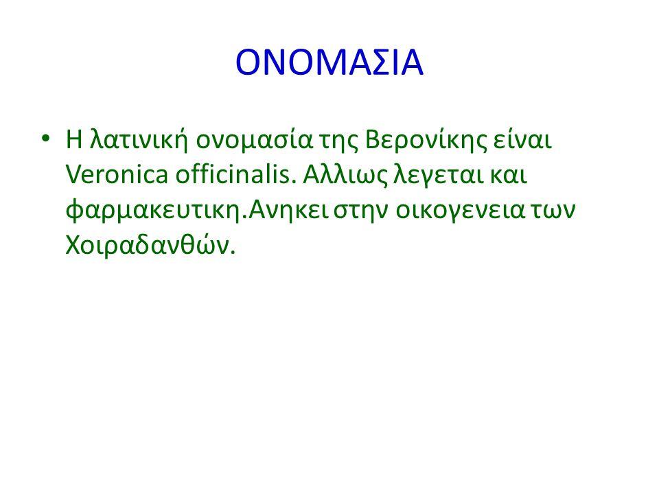 ΟΝΟΜΑΣΙΑ Η λατινική ονομασία της Βερονίκης είναι Veronica officinalis. Αλλιως λεγεται και φαρμακευτικη.Ανηκει στην οικογενεια των Χοιραδανθών.