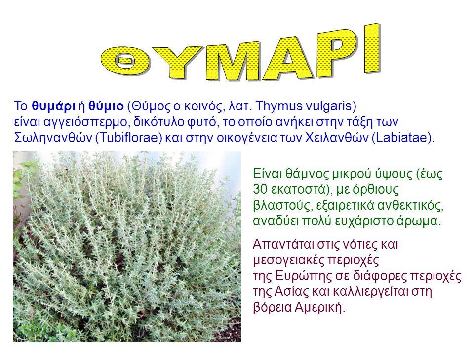 Το θυμάρι ή θύμιο (Θύμος ο κοινός, λατ. Thymus vulgaris) είναι αγγειόσπερμο, δικότυλο φυτό, το οποίο ανήκει στην τάξη των Σωληνανθών (Tubiflorae) και