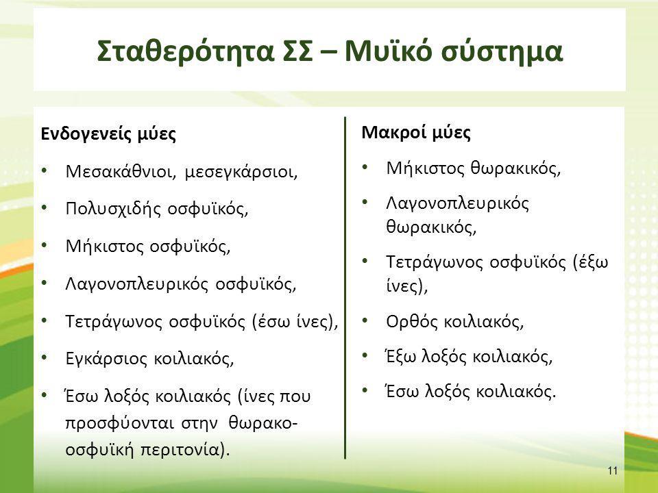 Σταθερότητα ΣΣ – Μυϊκό σύστημα Ενδογενείς μύες Μεσακάθνιοι, μεσεγκάρσιοι, Πολυσχιδής οσφυϊκός, Μήκιστος οσφυϊκός, Λαγονοπλευρικός οσφυϊκός, Τετράγωνος