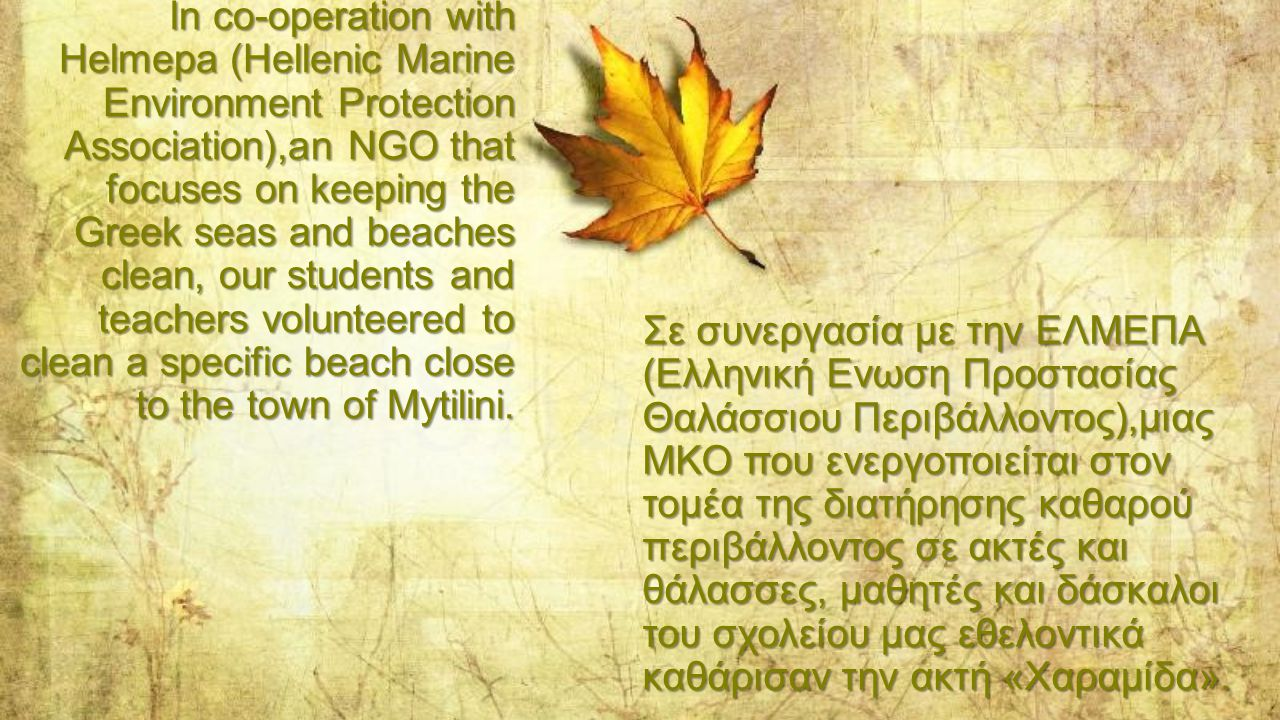 In co-operation with Helmepa (Hellenic Marine Environment Protection Association),an NGO that focuses on keeping the Greek seas and beaches clean, our students and teachers volunteered to clean a specific beach close to the town of Mytilini.