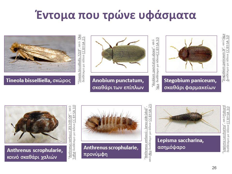 Έντομα που τρώνε υφάσματα Tineola bisselliella, σκώρος Tineola.bisselliella.7218 , από OleiTineola.bisselliella.7218Olei διαθέσιμο με άδεια CC BY-SA 2.5CC BY-SA 2.5 Anobium punctatum, σκαθάρι των επίπλων Anobium punctatum above , από Siga διαθέσιμο με άδειαCC BY-SA 3.0Anobium punctatum above SigaCC BY-SA 3.0 Stegobium paniceum, σκαθάρι φαρμακείων Stegobium paniceum bl , από SigaStegobium paniceum blSiga ΔΔιαθέσιμο με άδεια CC BY-SA 3.0CC BY-SA 3.0 Anthrenus scrophularie, κοινό σκαθάρι χαλιών Anthrenus verbasci 2013-05-04 , από Toffel διαθέσιμο με άδεια CC BY-SA 3.0Anthrenus verbasci 2013-05-04 ToffelCC BY-SA 3.0 Anthrenus scrophularie, προνύμφη Anthrenus verbasci - larva side (aka) , από Aka διαθέσιμο με άδεια CC BY-SA 2.5Anthrenus verbasci - larva side (aka)AkaCC BY-SA 2.5 Lepisma saccharina, ασημόψαρο Lepisma saccharina , από HalvardLepisma saccharinaHalvard διαθέσιμο με άδεια CC BY-SA 3.0CC BY-SA 3.0 26