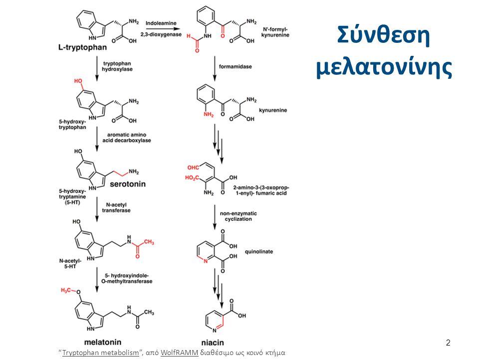 """Σύνθεση μελατονίνης """"Tryptophan metabolism"""", από WolfRAMM διαθέσιμο ως κοινό κτήμαTryptophan metabolismWolfRAMM 2"""