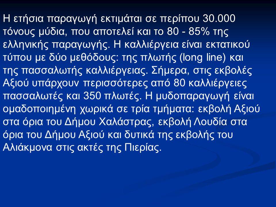 Η ετήσια παραγωγή εκτιμάται σε περίπου 30.000 τόνους μύδια, που αποτελεί και το 80 - 85% της ελληνικής παραγωγής. Η καλλιέργεια είναι εκτατικού τύπου