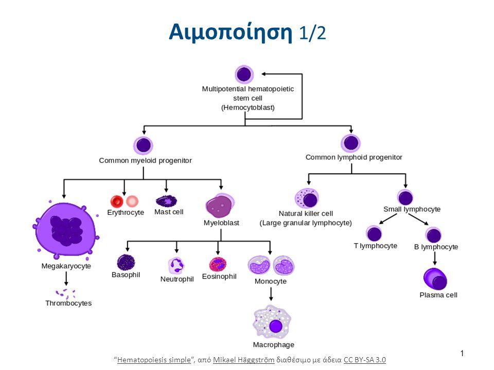 """Αιμοποίηση 1/2 """"Hematopoiesis simple"""", από Mikael Häggström διαθέσιμο με άδεια CC BY-SA 3.0Hematopoiesis simpleMikael HäggströmCC BY-SA 3.0 1"""